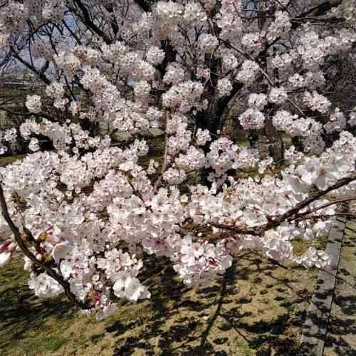 19-04-03-11-46-53-756_photo